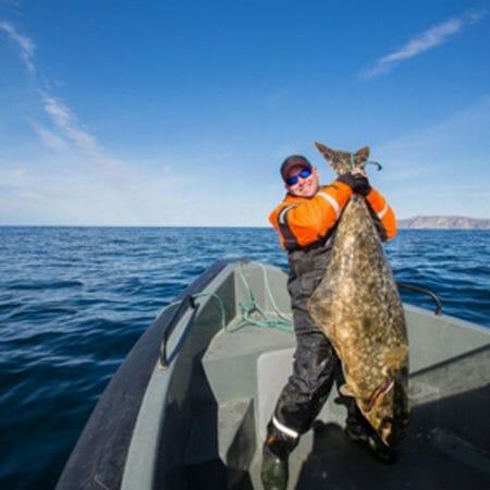 Heilbutt angeln in Alaska mit Svenson Sportfishing